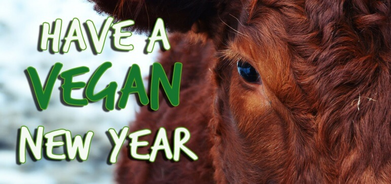 Vegan-New-Year-Cow-Skinny