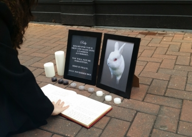 This Touching Memorial for a Rabbit Just Appeared Outside a Shop That Sells Fur