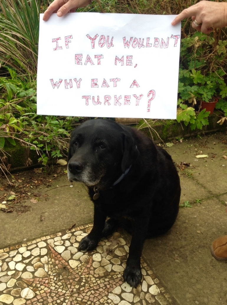 Dog with Sign Don't Eat Turkey Christmas