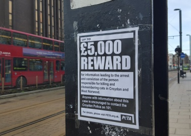 PETA Offers £5,000 Reward to Help Catch 'Cat Ripper of Croydon'