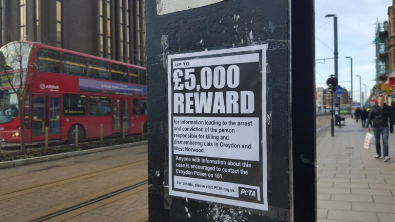 Croydon cat killer poster _mini