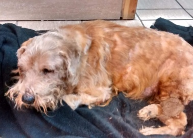 £10,000 Reward Offered After Elmo the Dog Had Almost All His Bones Broken and Was Dumped in a Graveyard