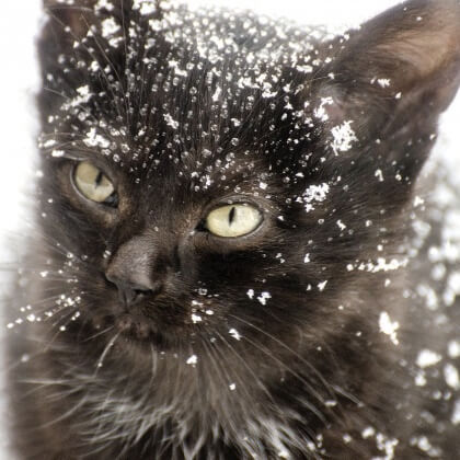 Keep Animals Safe During Cold Winter Weather
