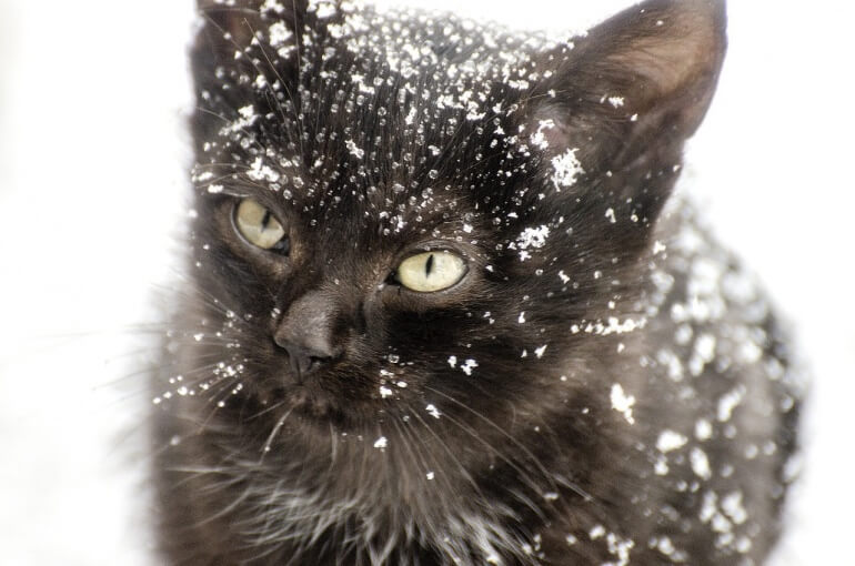 Snowy cat CC0
