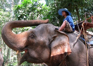 Tragic Death of British Tourist Shows What's Wrong With Elephant Rides