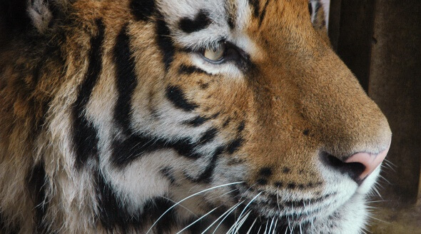 Wild animals don't belong in circuses