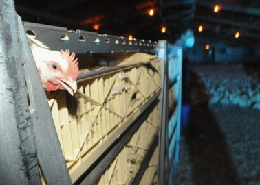 8 Disturbing Things You Didn't Know About Eating Chicken