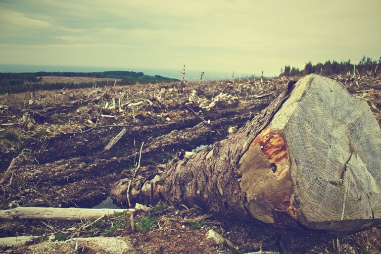Deforestation Trees