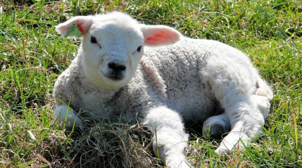 6 Reasons Why Christians Should Give Up Cruelty and Go Vegan for Lent