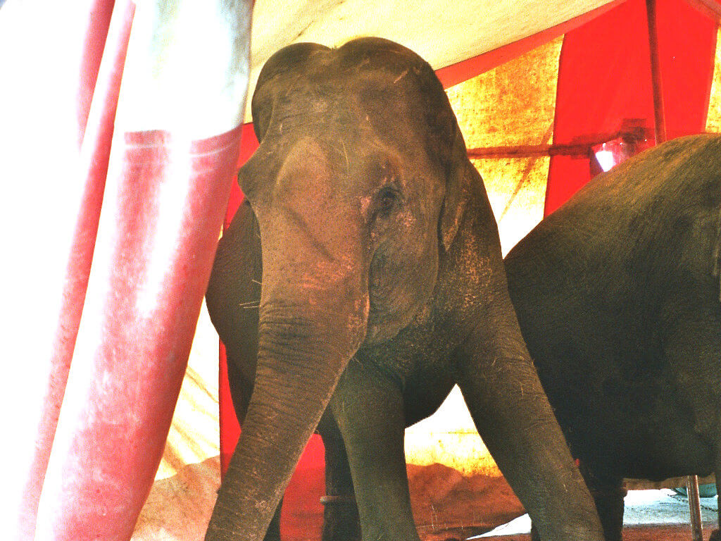 Help save elephants and other animals from circus suffering