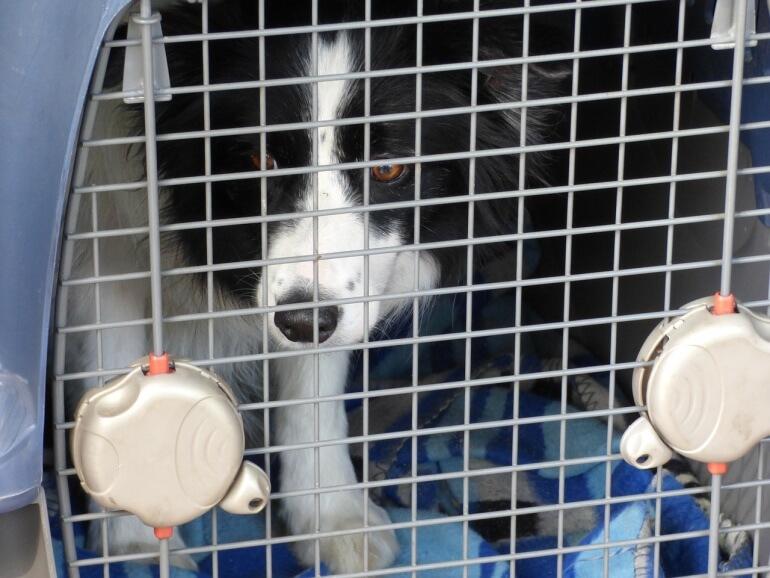 Dog transport