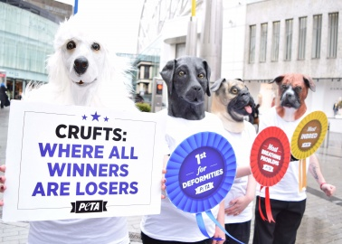 Some of the Most F*%#ed-Up Family Trees From Last Year's Crufts Winners