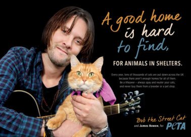 Help Cats Like Bob! Tackle the Homeless Animal Crisis by Spaying and Neutering