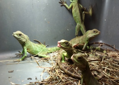 The Horrors of the Reptile Pet Trade