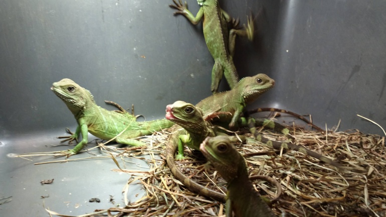 overcrowded reptile box pet mill