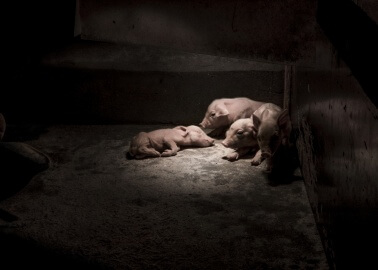 Historic German Legal Proceedings Call For Basic Rights for Animals