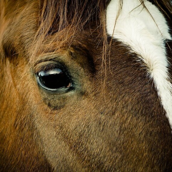 Urge These Companies to Stop Sponsoring the Grand National