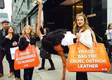 Prada's Newest Shareholder Is PETA US—Find Out Why