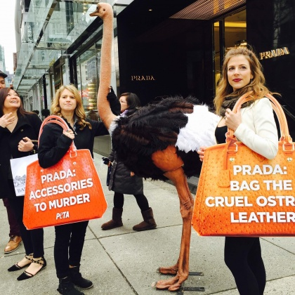 'Dead Ostrich' Protests Ruffle Feathers Around the World