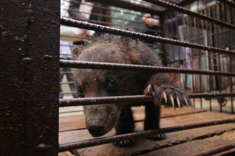 Many animals like this cub looked sickly, lethargic, frightened, and depressed.