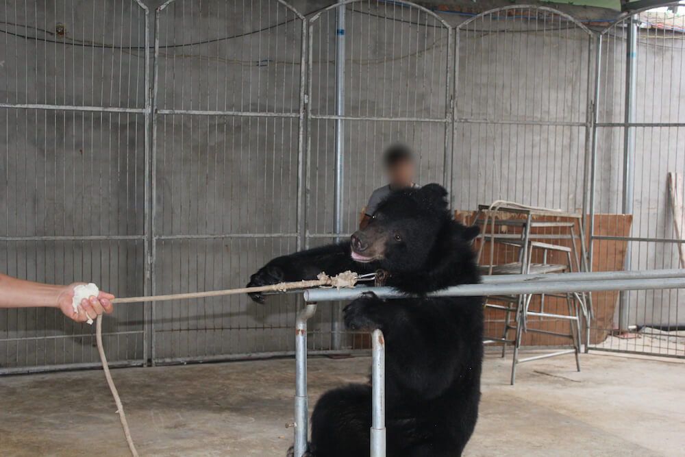 China Circus_Bear on parallel bars