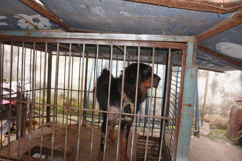 China Circus_Elderly Dog