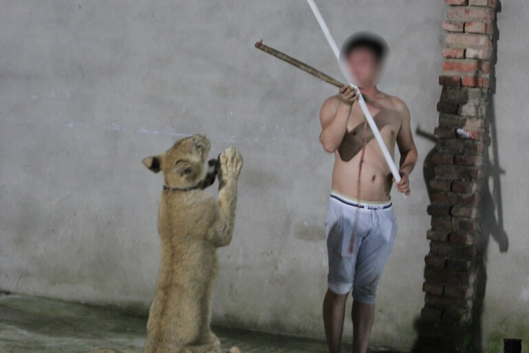 China Circus_Lion and trainer