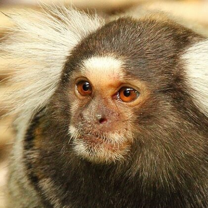 PETITION: MoD, End Experiments on Primates!