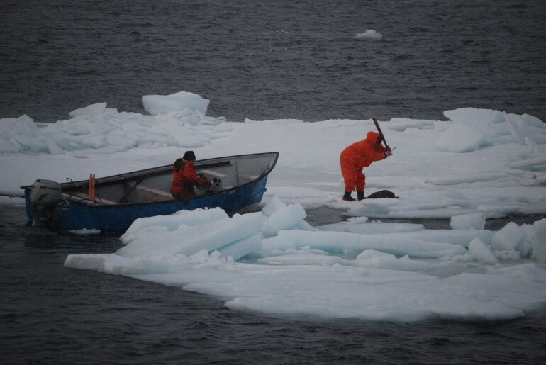 Sea Shepherd CS Seal Hunt 2