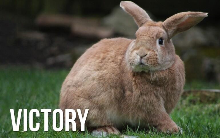 Victory Bunny