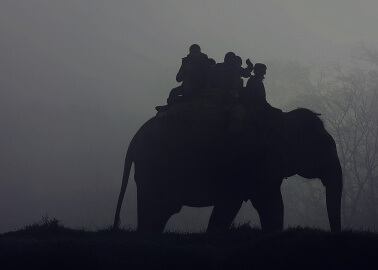 This Elephant Collapsed and Died From Exhaustion After Years of Carrying Tourists on Her Back