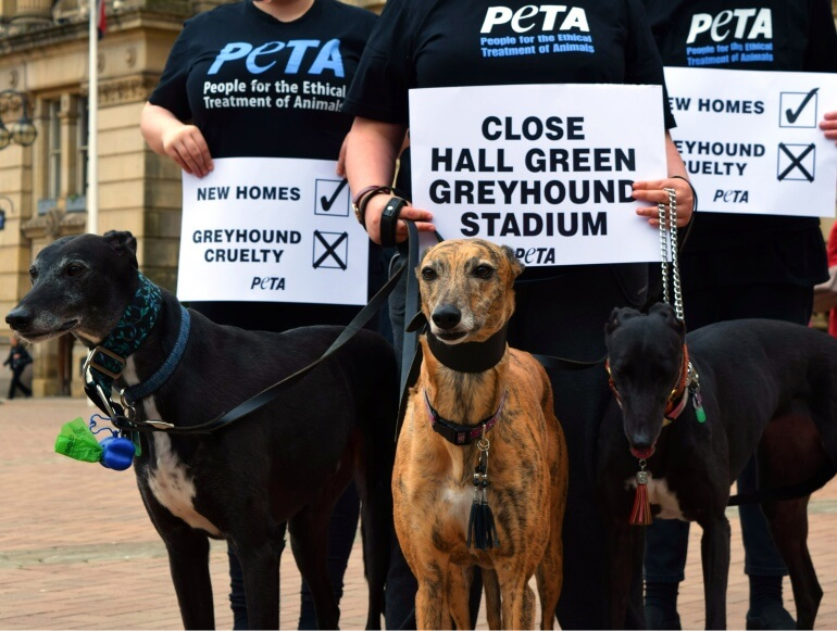 Hall Green Stadium protest Birmingham