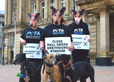 Archaic Dog Track Faces Opposition in Birmingham