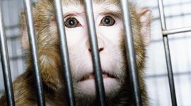 H16EEA-Primate-Viv-HP