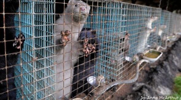 Mink Farm We Animals Banner