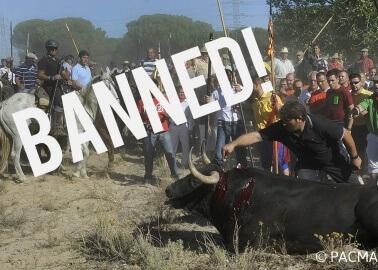 VICTORY: Barbaric 'Toro de la Vega' Bull Stabbing Festival Finally Banned!