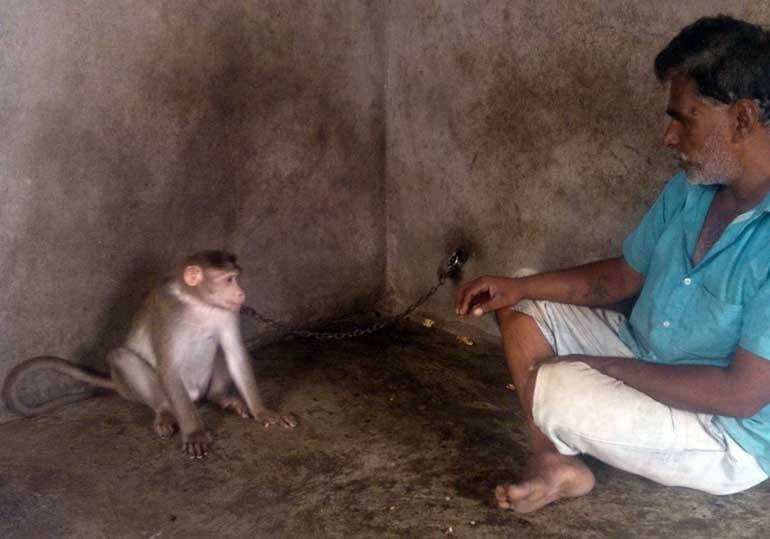 Animal Rahat - Monkey