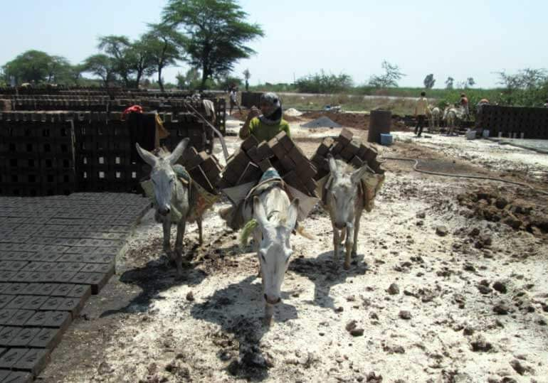 Animals in India - Donkeys at Brick Kiln
