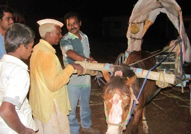 Dr. Yadav Helping Donkey