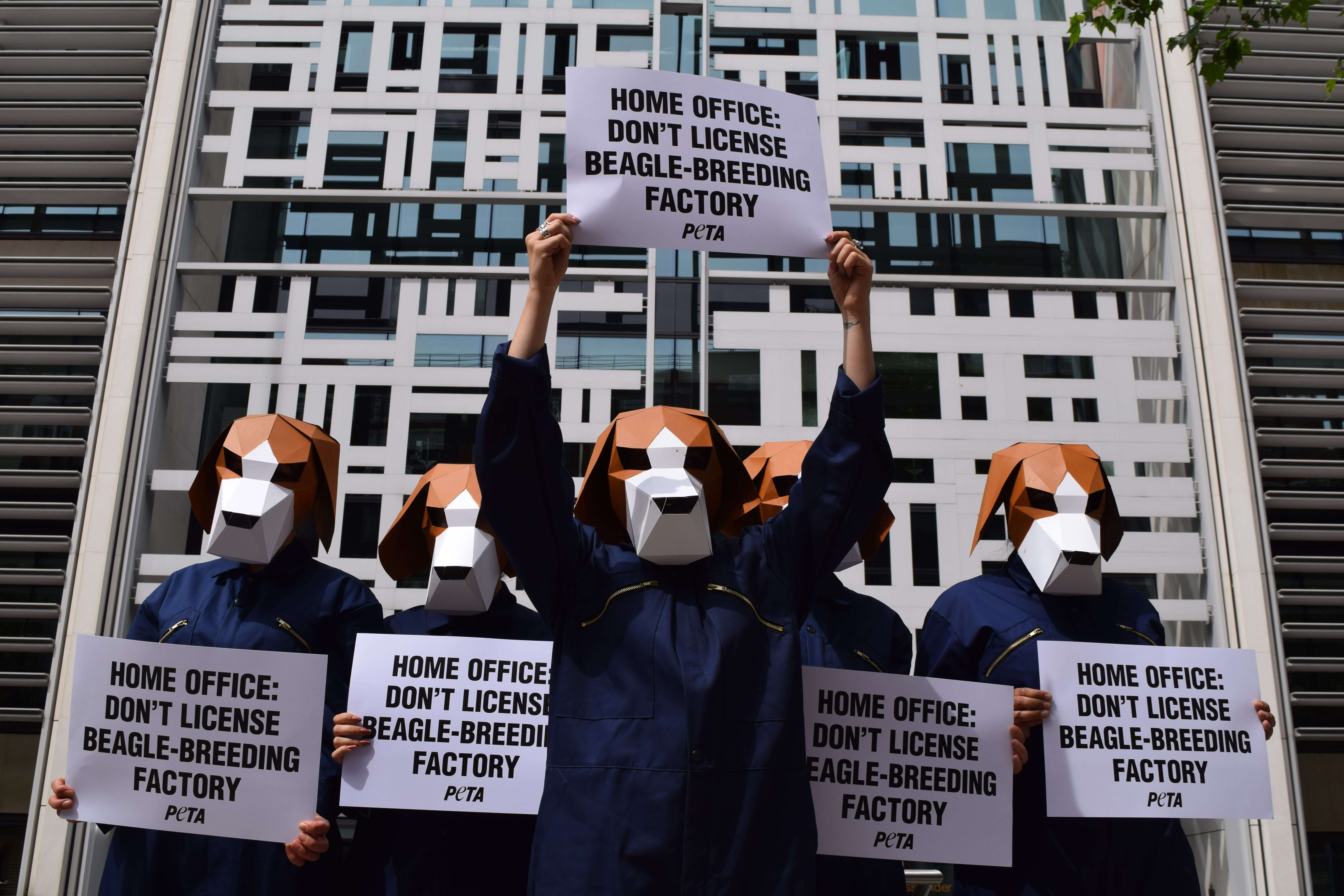 Beagles Descend On The Home Office To Fight Licensing Of Breeding