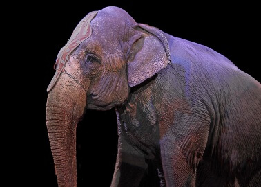 Will Scotland Be the First Part of the UK to Ban Wild-Animal Circuses?
