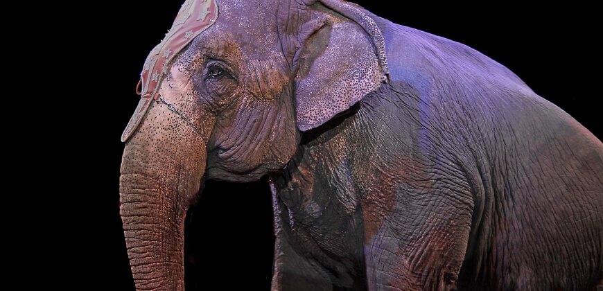 Elephant Circus CC0