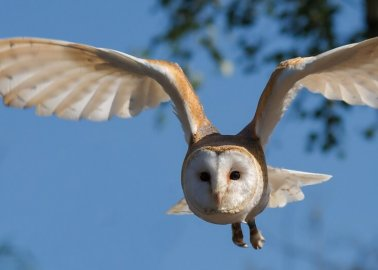 Wizards Rejoice! New 'Harry Potter' Play Stops Using Live Owls