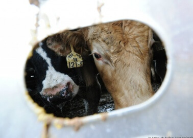 Shocking Investigation Findings Reveal Abuse of Animals Exported From EU