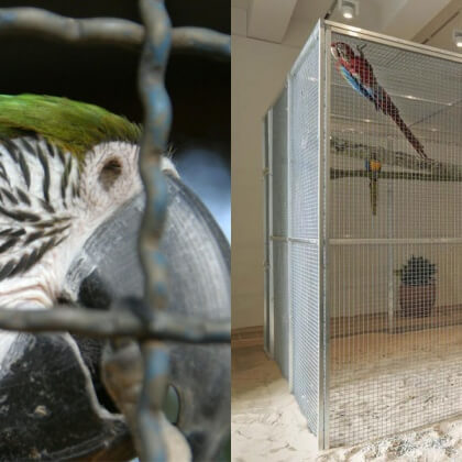 Tell Tate Modern Not to Display Live Parrots