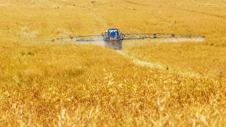 Farming Crops Legumes Pulses