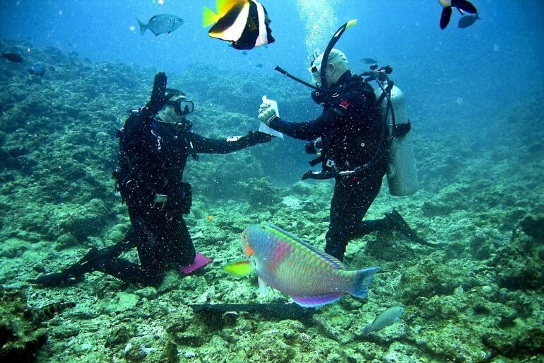 Divers Coral Reef Fish