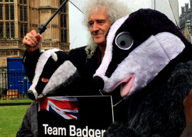 Huge 'Selfie Mosaic' Delivered to Politicians Ahead of Decision on Cruel Badger Cull
