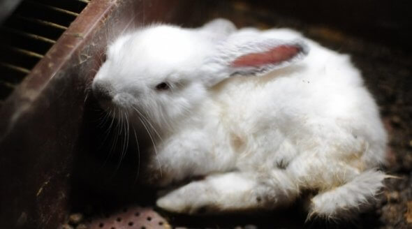 URGENT! Stop Rabbits From Being Killed for Their Meat and Skins in Staffordshire
