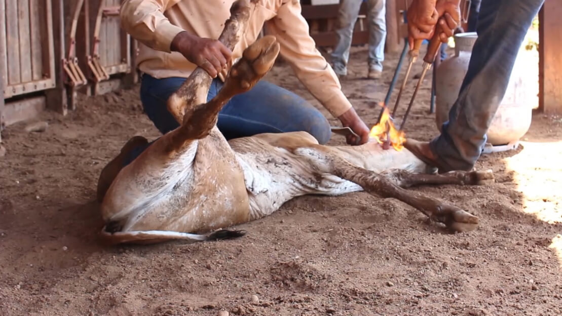 Urge H&M to Stop Selling Animal Skins | People for the Ethical